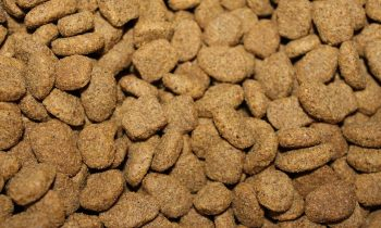 What The Future Holds For The Animal Feed Phosphates Market?